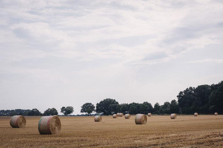 Feld in Kleinenkneten (Wildeshausen, Niedersachsen)