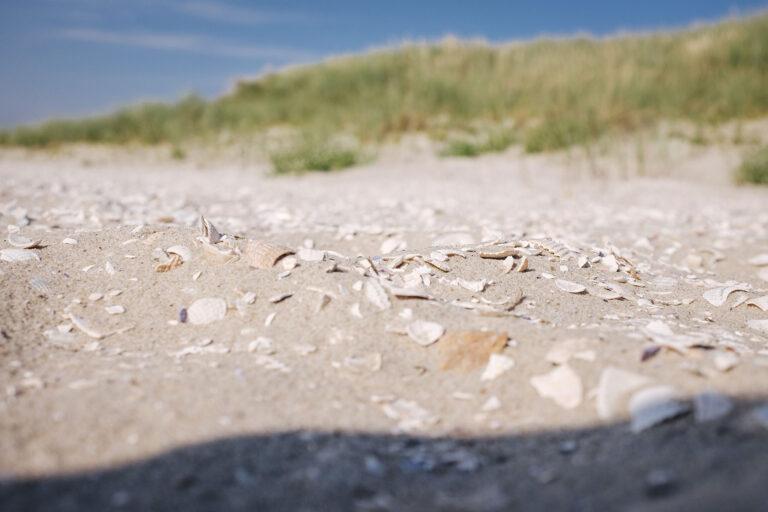 Muscheln auf Langeoog (Wittmund, Niedersachsen)