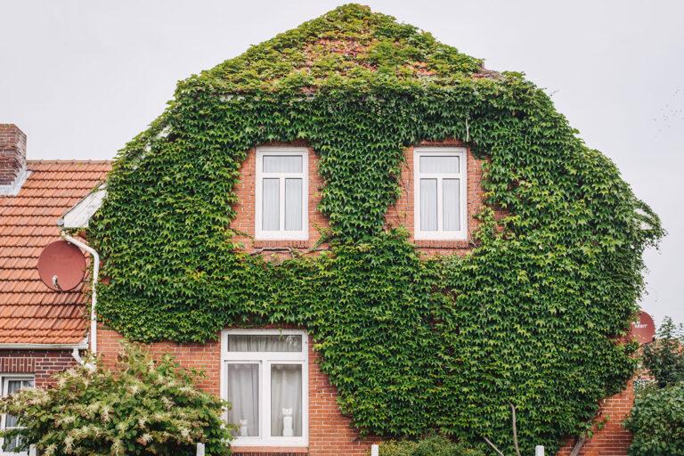 Bewachsenes Haus auf Langeoog (Wittmund, Niedersachsen)
